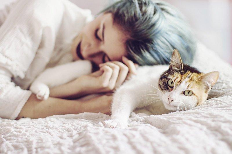 кошка лечит