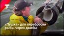 «Рыбная пушка»: как устроено и зачем нужно устройство для переброски рыбы через дамбы