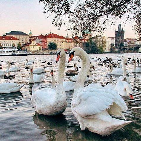 Прямые рейсы в Прагу за 11700 рублей туда-обратно из Москвы