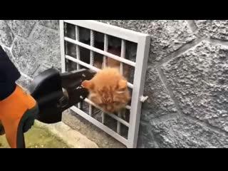 Толстый котик застрял головой в решётке подвала в Подмосковье