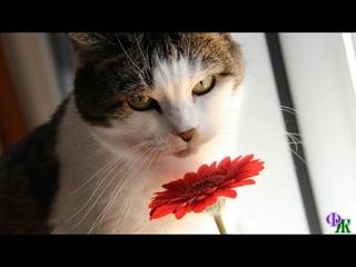 Кошка Марьяна считала, что им и вдвоём хорошо, но Валера выглядел таким счастливым, что она…