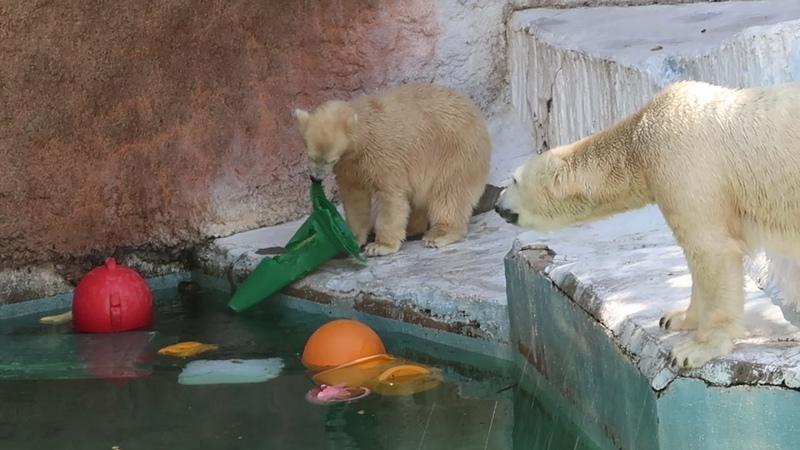 2 7 Aug 2021 Shilka and Hochan at Tennoji zoo Osaka Japan