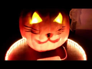 Вечеринка Котябрь - Halloween в студии Twin Star