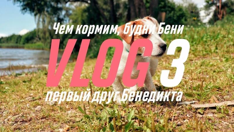 Vlog 3 ЧЕМ КОРМИМ СОБАКУ БУДНИ ПЕРВЫЕ ДРУЗЬЯ БЕНЕДИКТА НОВОЕ ТАТУ
