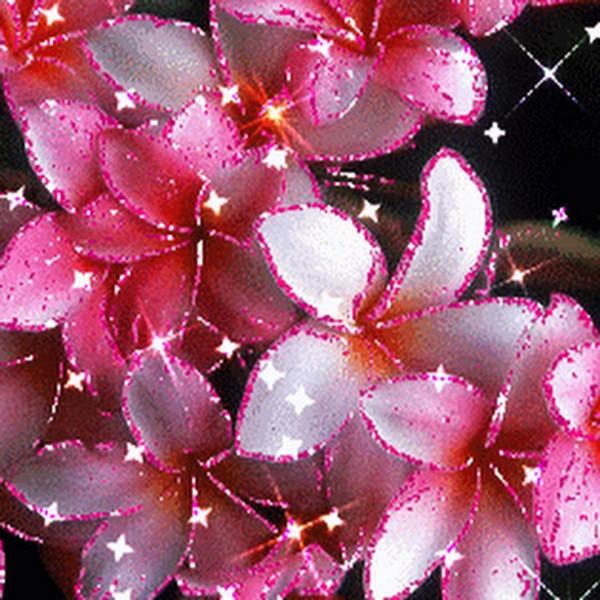 Комнатные цветы каталог с названиями и фото флот