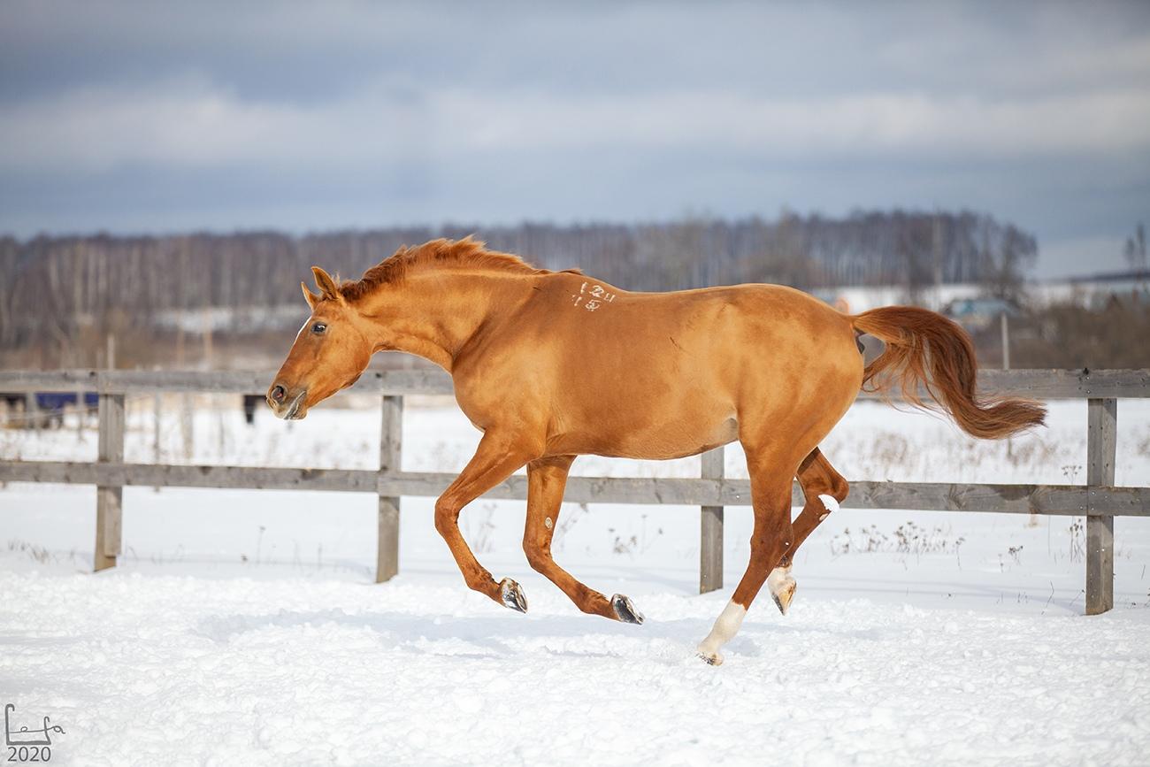округе юловский конный завод фото премного благодарен