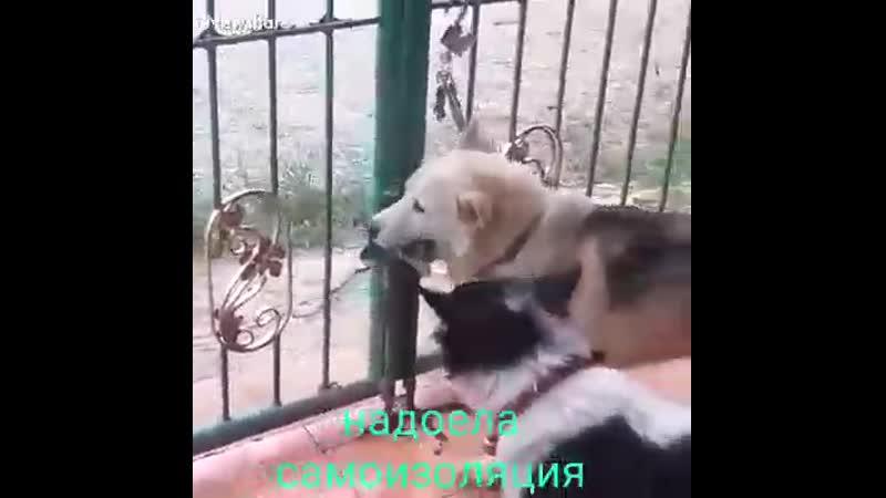 VIDEO 2020 05 12 19 09