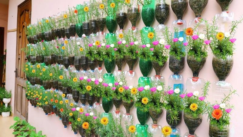 Amazing Vertical Garden Using Plastic Bottles Portulaca Moss Rose Garden on Wall
