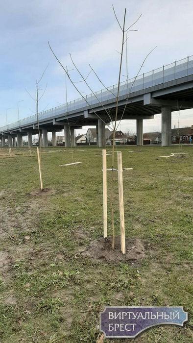 ЖКХ высаживает деревья и предлагает брестчанам внести свой вклад в озеленение города