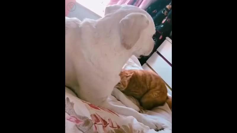 Пес не дает коту сделать кусь