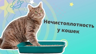 Нечистоплотность у кошек. Почему кошка ходит мимо лотка и что с этим делать?