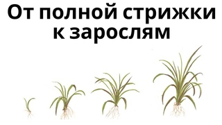 Рост аквариумных растений в динамике