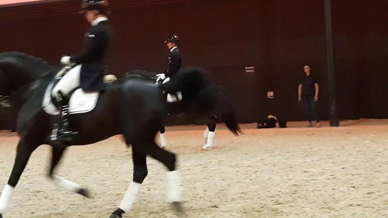 Glock's Total US KWPN Stallionshow 2020