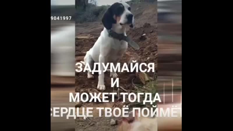 ФОНД ДОБРЫЙ ВОЛЧОНОК