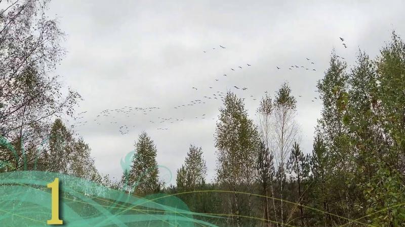 7 интересных фактов о перелётных птицах Природа nature