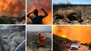 Fires in Sardinia: 20,000 hectares of vegetation ravaged, July 25, 2021