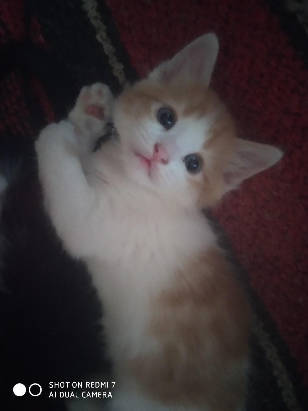 Отдам котика в хорошие руки, кушает все, в лоток ходит, очень умный и ласковый, писать в директ