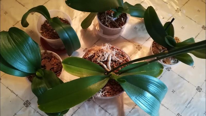 Результаты посадки орхидей в ЦеоФлору спустя месяц