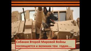 Познавательный час «Собаки – герои Великой Отечественной Войны»