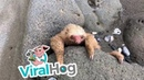 Baby Sloth Rescue in Costa Rica ViralHog