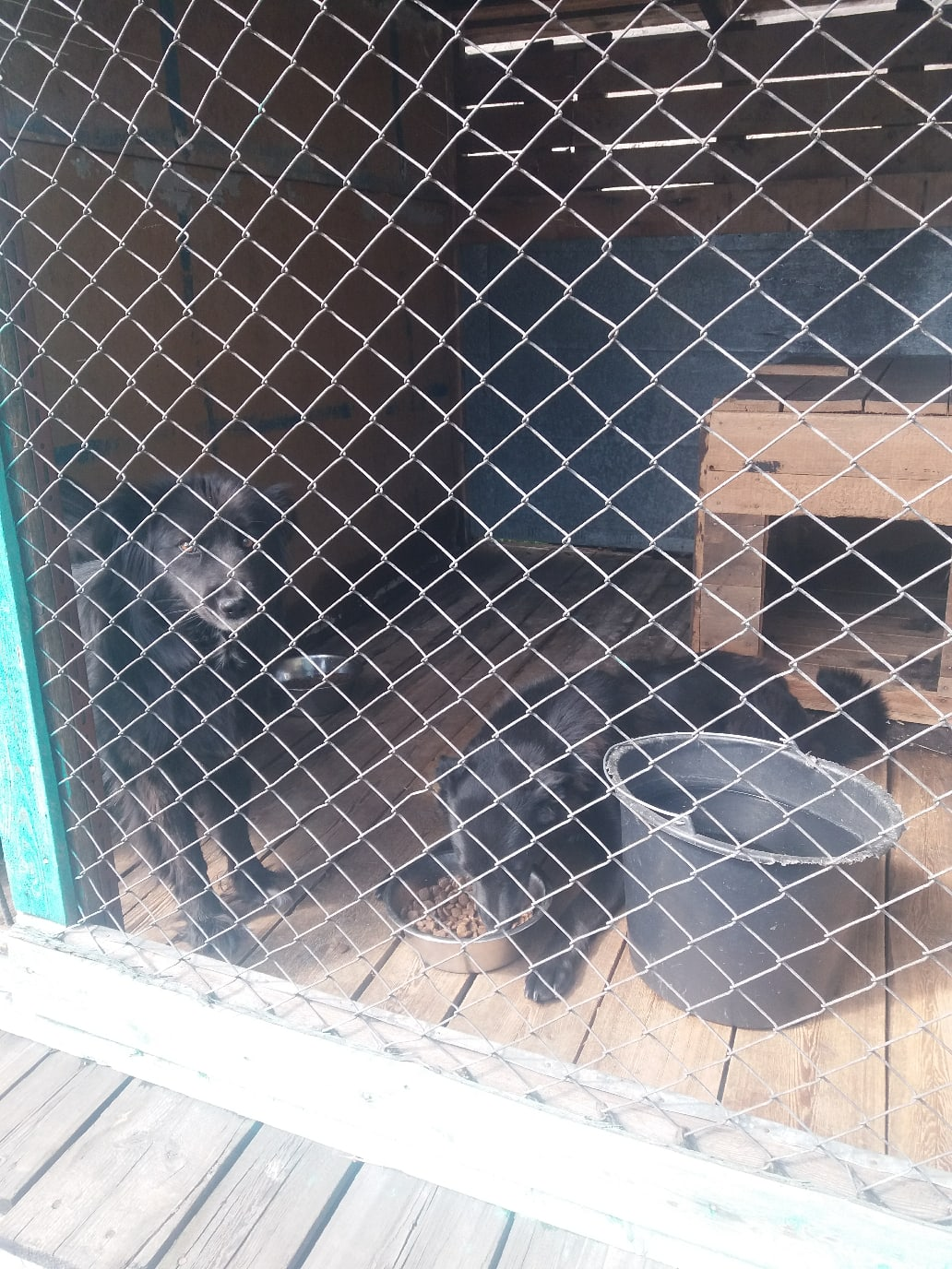 Пункт передержки животных в Нерюнгри – новая жизнь дворняг