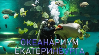 Океанариум Екатеринбурга   Ураловед