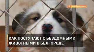 Как поступают с бездомными животными в Белгороде