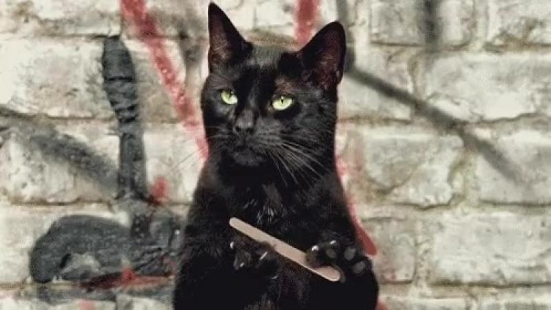 Когда твоему фамильру говорят что он обычный кот