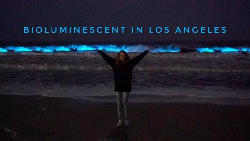 Bioluminescent plankton in Los Angeles   Светящаяся вода