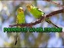 Minecraft parrots wholesome dance meme