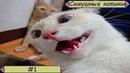 Смяушные котики 1. Смешные приколы с котами и кошками 2020.