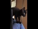 Котенок в дар