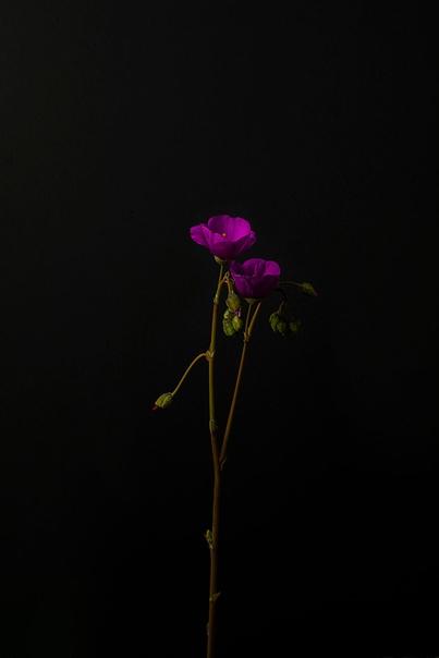 Isaac Alvarez и его фотографии цветов в фотопроекте «Аромат»