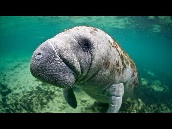WWF популяция животных на планете резко сократилась