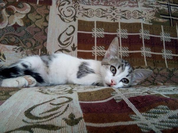 Отправить фото кошки на конкурс в екатеринбурге