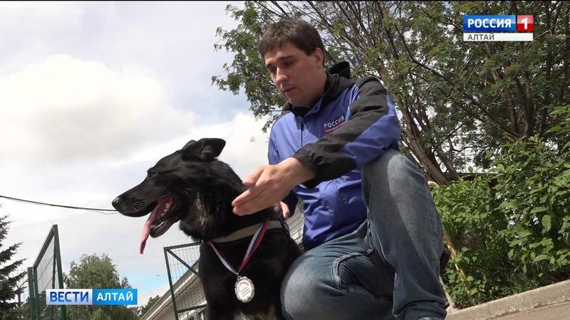 Барнаульская овчарка Сандера раскрыла сотню преступлений и спасла жизнь человеку Barnaul22