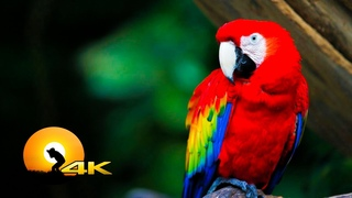 4K VIDEO ULTRAHD  WILDLIFE  ANIMALS WITH RELAXATION MUSIC FOR 4K UHD TV