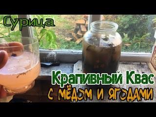 Сурица. Квас из Мёда и Крапивы. Рецепт и Дегустация