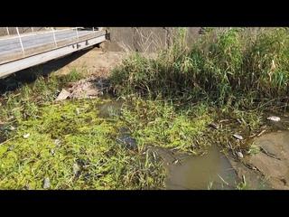 Состояние рек Керчи сегодня. Как почистили Мелек Чесме? Как выглядят другие реки города. Джарджава