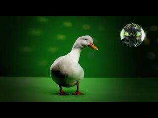 Libertad al pato WilliX