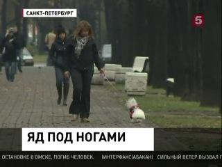 """""""Яд под ногами"""". Репортаж 5-го канала от 14 ноября."""