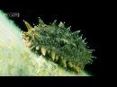 Очаровашка с зубастым задом и кишками вместо легких - Морской огурец