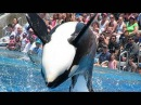 SeaWorld's old Shamu show (with trainers in the water!)