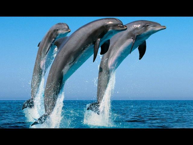 Люди-дельфины и Нерушимая стена!