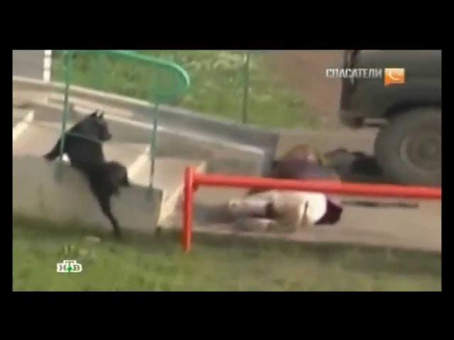 Нападение собаки на людей Dog attacks on people
