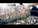 документальный Добыча Рыба 25 12 2014