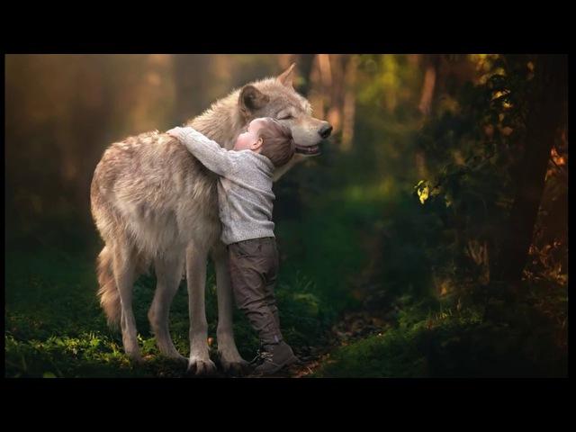 Волчёнок про мальчика которого воспитала волчица