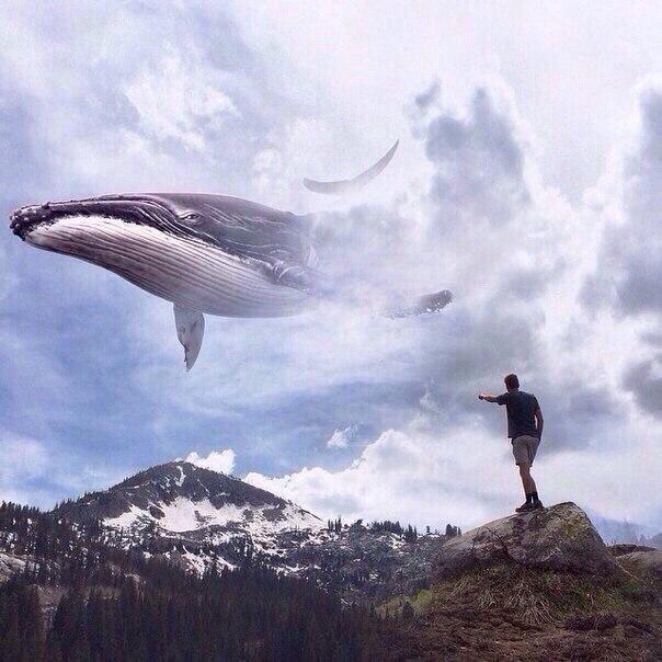 дом фоторедактор выпрыгивает кит в картинке просто модель, она
