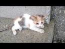 子猫を保護して1年-Rescue a kitten 1 year.【Uzu Nene channel】ウズネネチャンネル