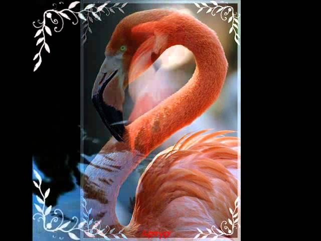 Розовый фламинго Алёна Свиридова
